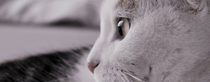 Healing Cats with Crystals 07 April 2018